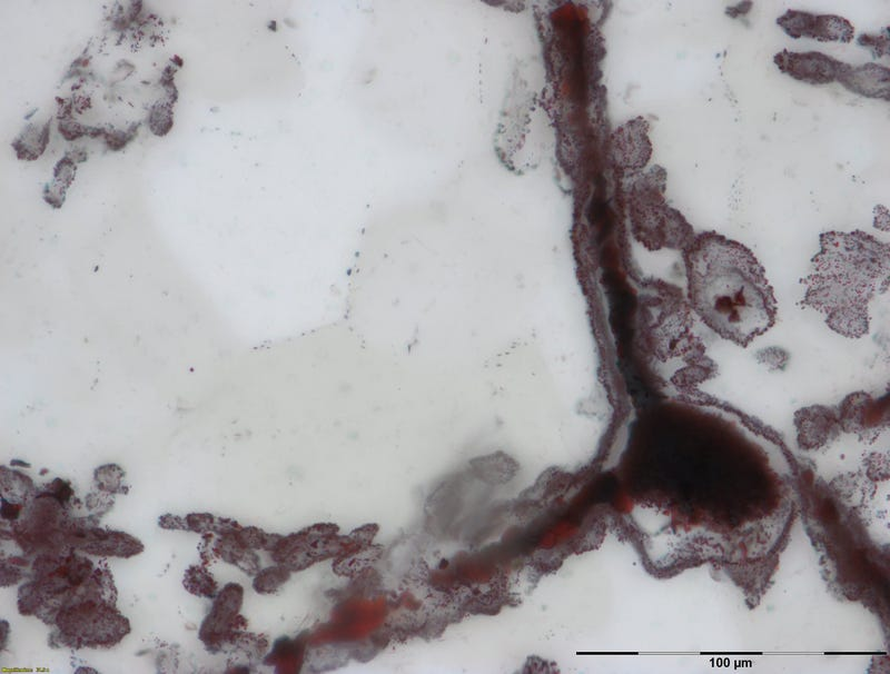 A hematite filament attached to a clump of iron. These clumps were once microbial cells, and are similar to modern microbes found in hydrothermal vent environments.