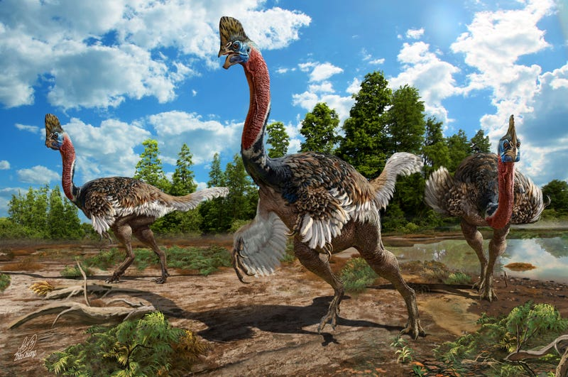 Artistic reconstruction of Corythoraptor jacobsi (Image: Zhao Chuang)