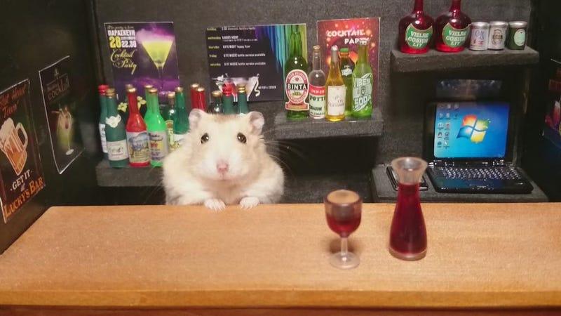 Illustration for article titled Hamster Bartenders Are the Best Bartenders