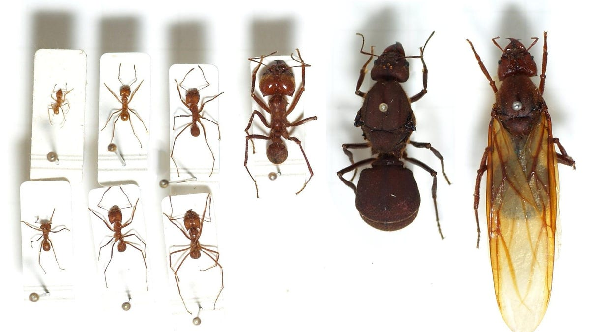 10 frightening facts you probably didnt know about ants buycottarizona Choice Image