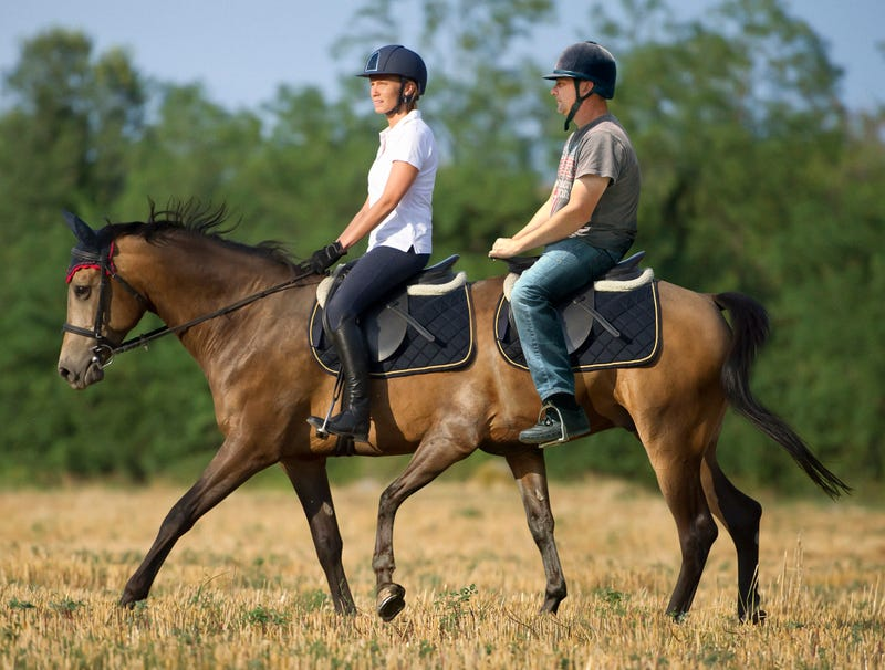 Illustration for article titled Calumet Farms Unveils New Tandem Horse For Couples Riding