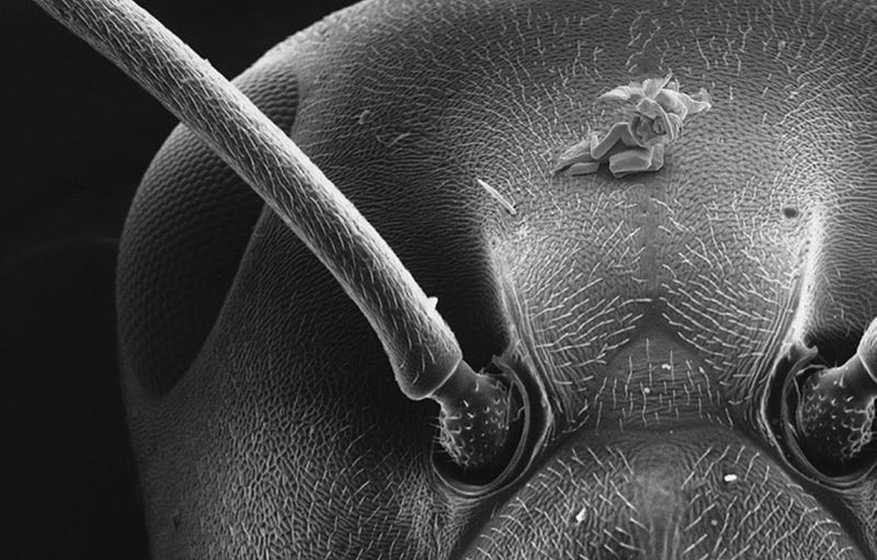 Illustration for article titled These amazing nudes are the smallest sculptures ever made [NSFW]