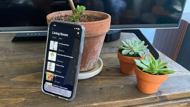This App Is Keeping My Plants Alive, No Thanks to Me