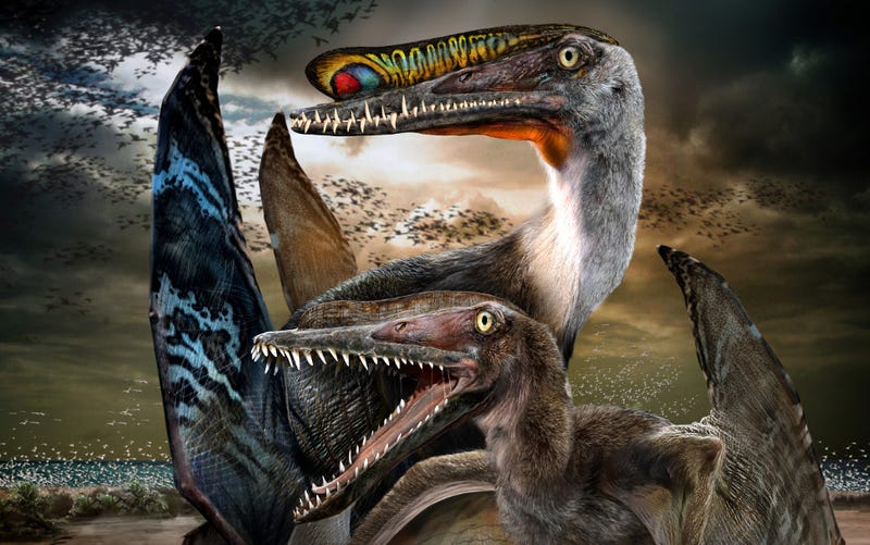 Illustration for article titled Massive Fossilized Pterosaur Colony 'Most Important Ever Found'