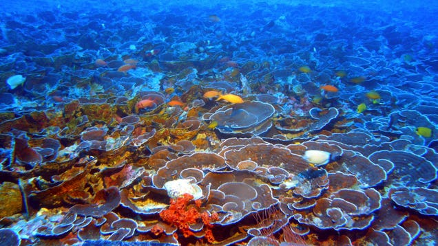 Hawaii Legislature Passes First-of-Its-Kind Ban on Sunscreens With Ingredients That Kill Corals
