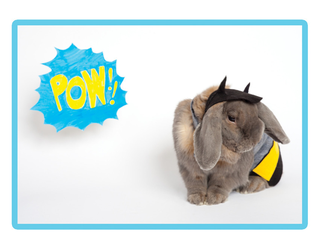 Illustration for article titled This Cosplaying Rabbit Is Already The Best Calendar Idea Of 2015