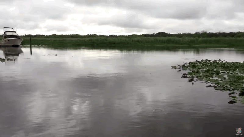 Florida: ¿Qué hay bajo el agua? Video en río asombra e indigna
