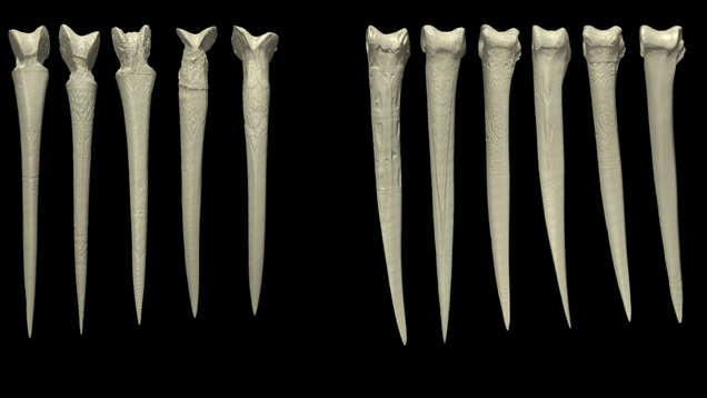 Why Papuan Men Made Daggers From Human Thigh Bones