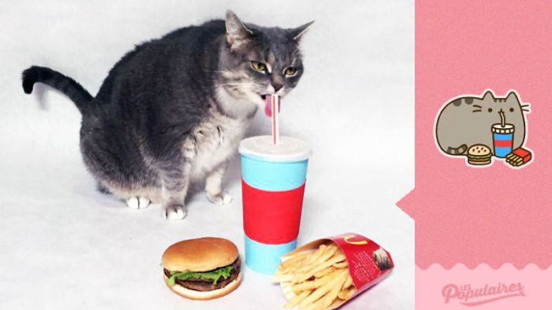 Illustration for article titled Pusheen stickers recreated with a real cat is unsettling, adorable