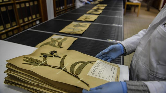 Press Flowers for a  Quarantine Herbarium