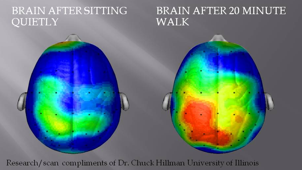 What Happens To Our Brains During Exercise And Why It Makes Us Happier Cool Circuits Puts Your Brain Muscle The Test