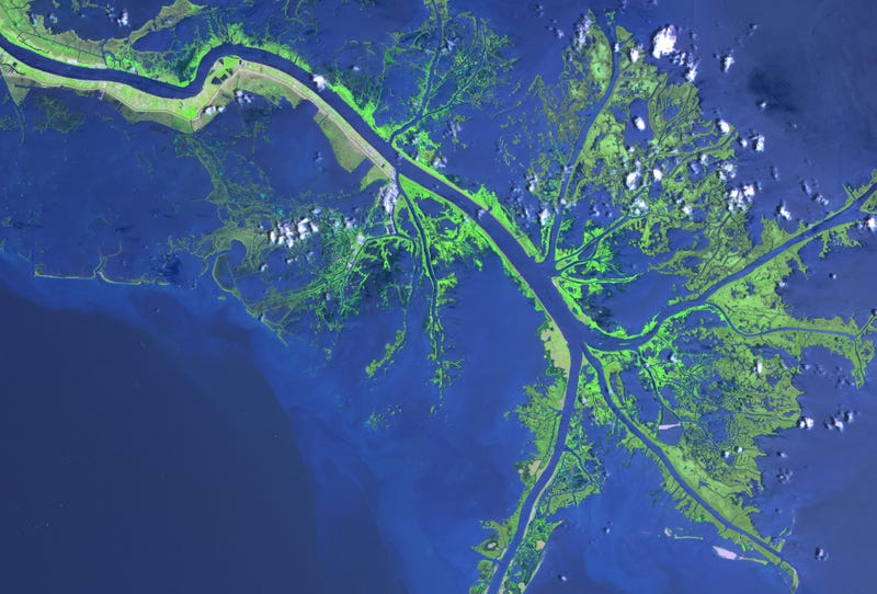 Illustration for article titled Pruning the Mississippi River Could Protect New Orleans From the Next Katrina