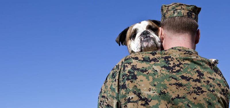 Illustration for article titled US Military Has Killed Over 1,200 Service Dogs