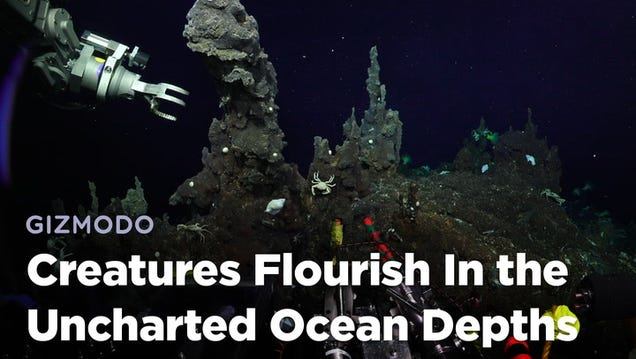 Breathtaking New Video Footage of the Ocean s Uncharted Depths