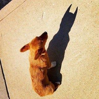 Illustration for article titled I'm Batdog