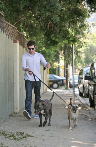 Illustration for article titled Adam Brody Gets Taken For A Ride