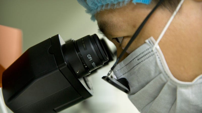 Qin Jinzhou, an embryologist who works at He Jiankui's lab in Shenzhen, gazes through a microscope.