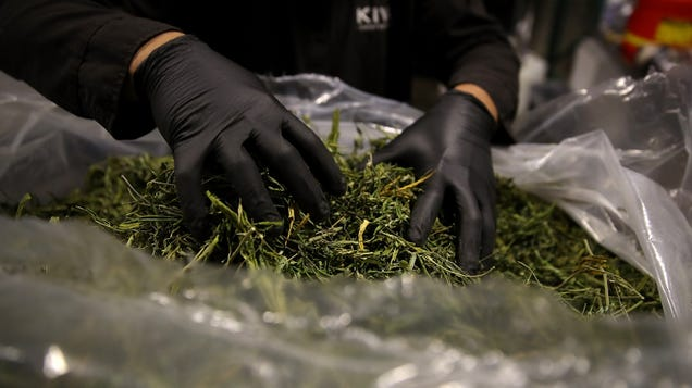 San Francisco to Expunge Thousands of Cannabis Convictions With Help From an Algorithm