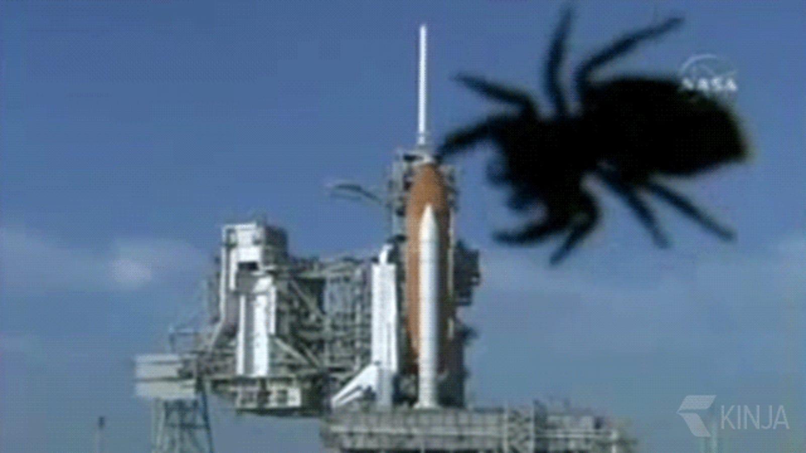 Los encontronazos más curiosos entre animales y cohetes, en imágenes