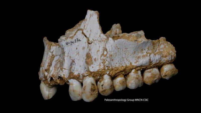 Image: Paleoanthropology Group MNCN-CSIC