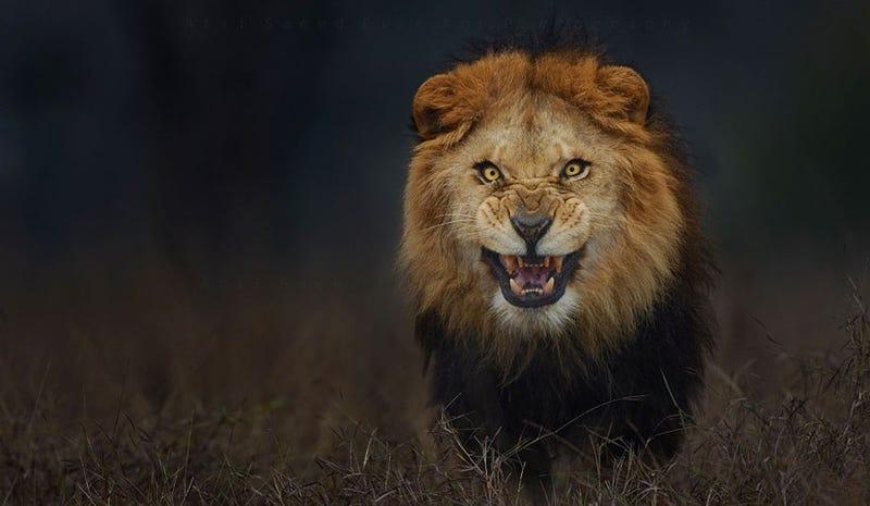 Esta aterradora foto de naturaleza casi le cuesta la vida a su autor
