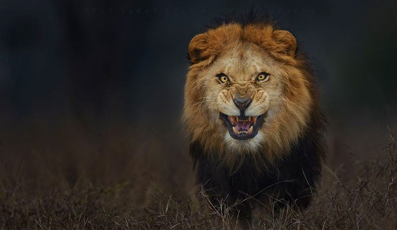 Illustration for article titled Esta aterradora foto de naturaleza casi le cuesta la vida a su autor