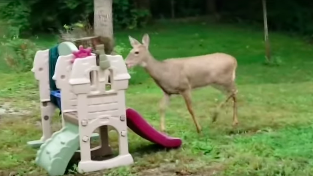 Last Call: Tripping deer/Phil Collins video holds up