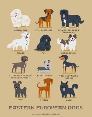 Illustration for article titled Láttad már a cuki grafikát a kelet-európai kutyákról?