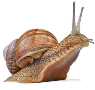 Illustration for article titled TAY Time Chat: All Hail Our New Snail Overlords