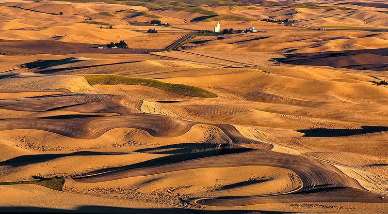 Palouse wheat fields (Image: Charles Knowles)