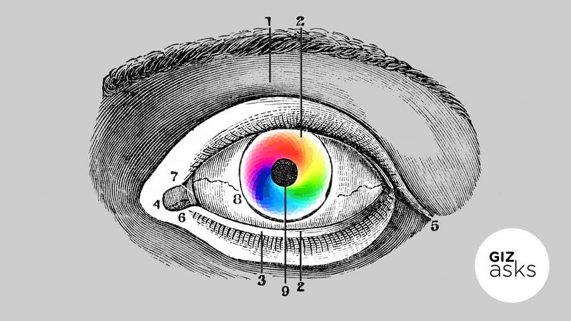 Will There Ever Be New Colors That We Can See?