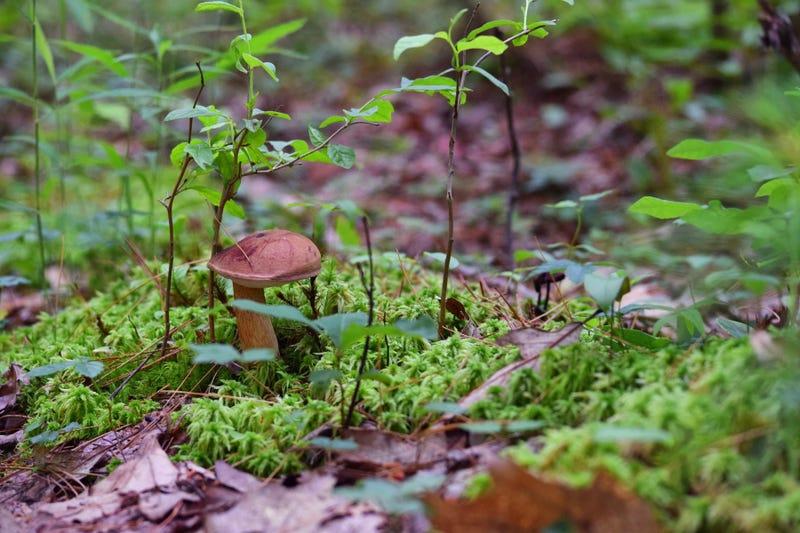 Illustration for article titled Mushrooms in a bog