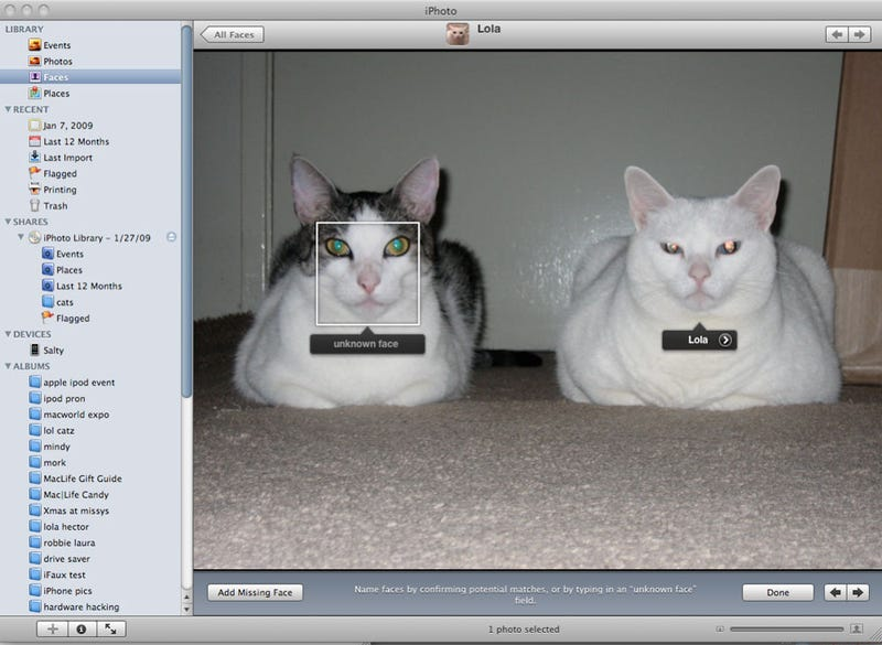 Illustration for article titled iPhoto's Facial Recognition Feature Works on Cats