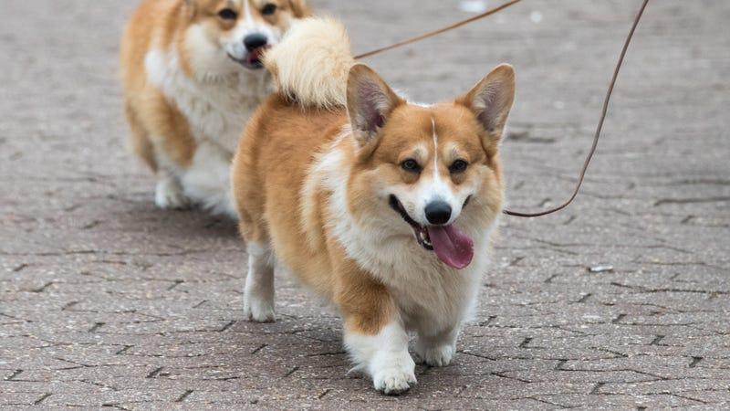 Is Gravy Train Good For My Dog
