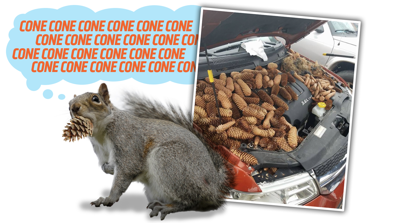 Pine Cone-Junkie Squirrel Shoves Over 50 Pounds Of Pine Cones Into Car's Engine Bay