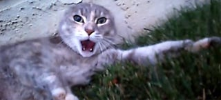 Illustration for article titled Video of a cat fight as seen from the perspective of one of the cats
