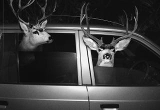 Illustration for article titled How To Avoid Hitting A Deer With Your Car
