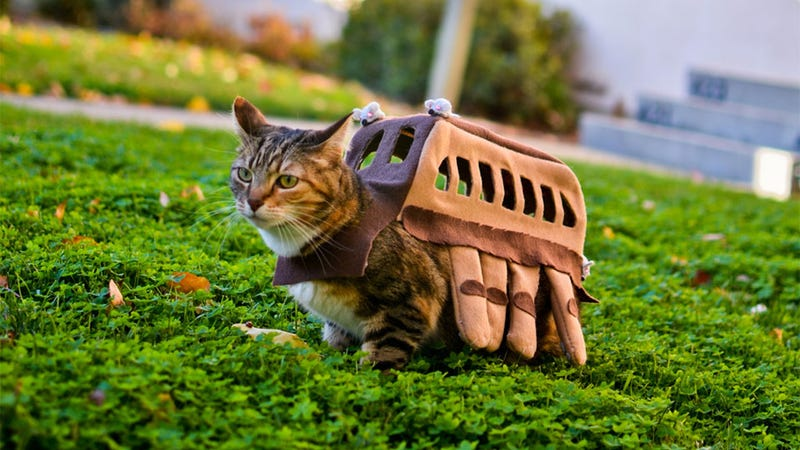 Illustration for article titled Cat Cosplay is the New Human Cosplay