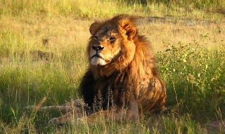 Illustration for article titled Delta Halts Shipping Wildlife Trophies In Response To Lion Slaying