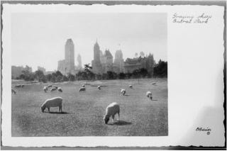 Illustration for article titled Sheep in Central Park, Archaeo-Bunnies, and Cockroach Pheromone Bots