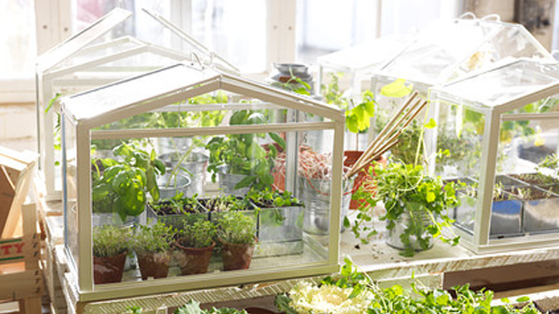 Illustration for article titled Grow a Tiny Garden in a Tiny Ikea Greenhouse