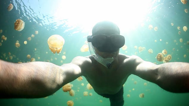 What It S Like To Swim Through A Wall Of Jellyfish