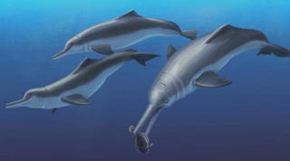 Illustration for article titled These Ancient Dolphins Show That Dolphins Have a Complicated History
