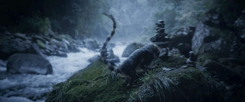 A Haunting Short Film Set in a World Where Evolution Happens Rapidly—And Is Often Deadly