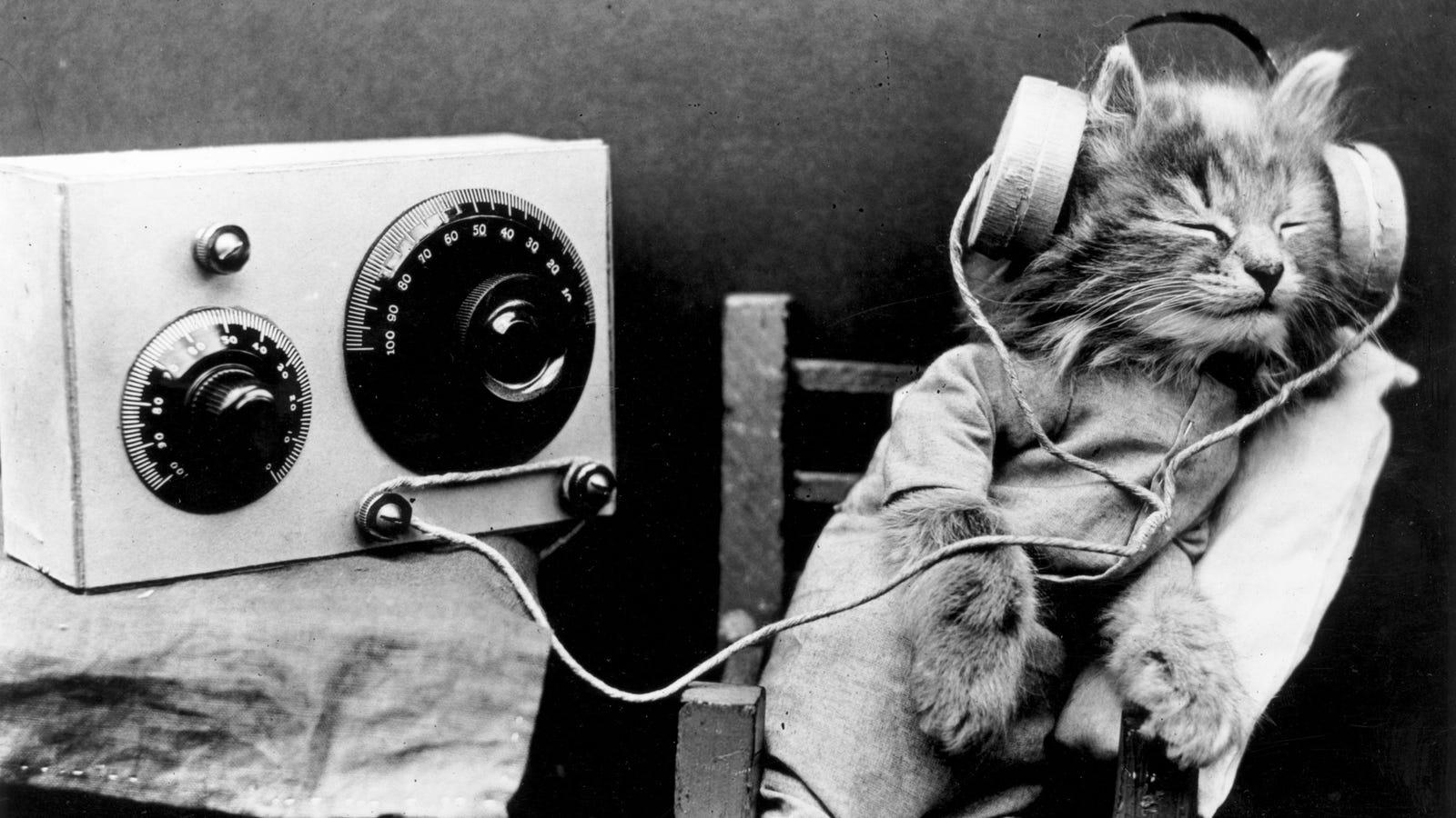 Viaje al cerebro de un gato para averiguar qué sueñan (y si son sonámbulos)