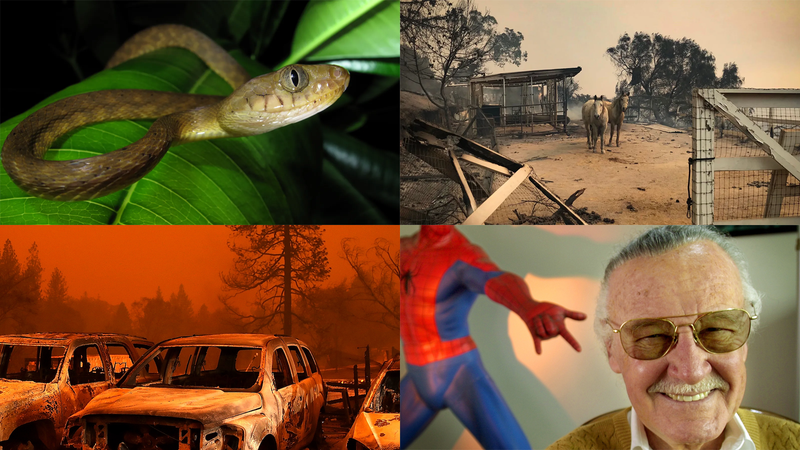 Illustration for article titled Wildfires, Invasive Snakes, and Saying Goodbye to a Legend: Best Gizmodo Stories of the Week