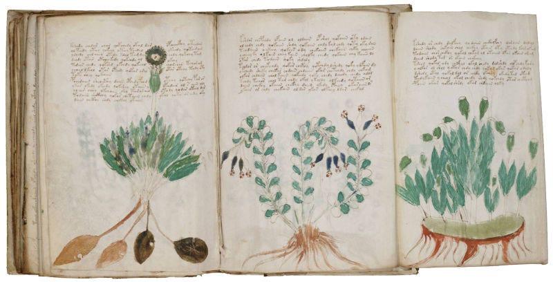 El códice Voynich. Wikimedia Commons