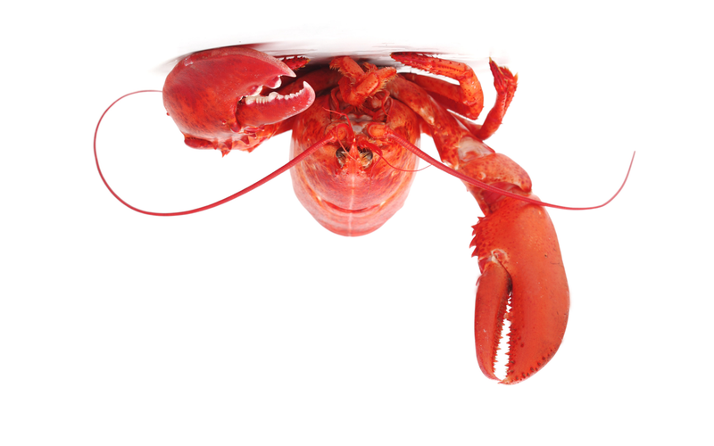 reconsider the lobster