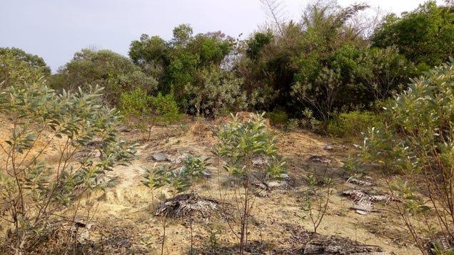 Saplings in India's Sadhana Forest. Photo: Jason Najum