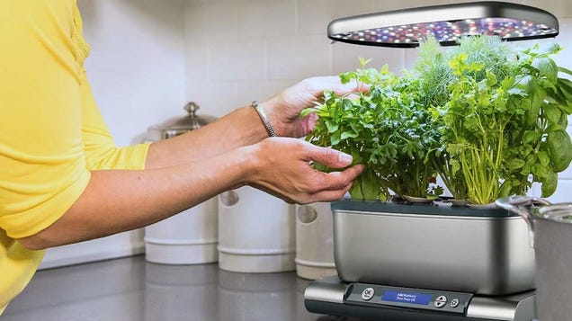 You--Yes, You--Can Grow Your Own Herbs and Vegetables With This Discounted AeroGarden